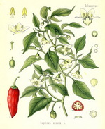 Capsicum Botanical Cycle 2X