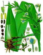 Cardamon Botanical Cycle