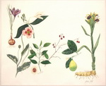 Ginger Botanical Cycle 2