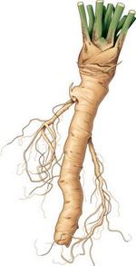 Horseradish Botanical Image