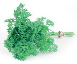 Parsley Curly Leaf Bunch