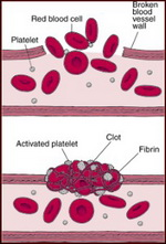 Vitamin K's Role In Blood Clot Formation