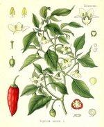 Capsicum Botanical Cycle 2X