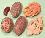 Nutmeg Tree Spice Parts