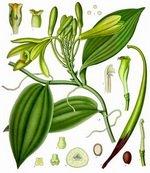 Vanilla Botanical Cycle 1